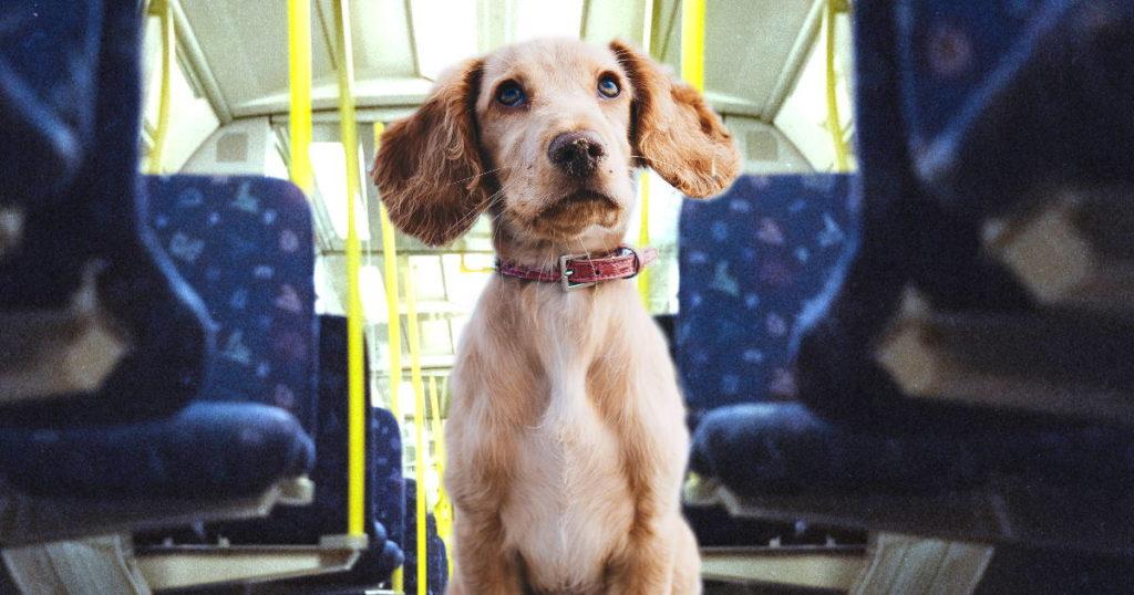 En Alemania las mascotas pueden viajar en el transporte publico, en el tranvía o autobús