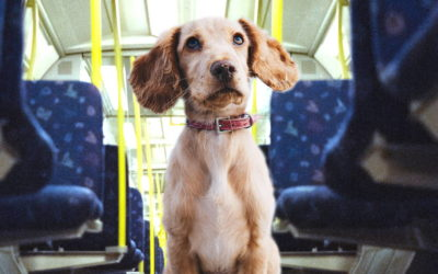Mascotas en el transporte público en Alemania (Diferencia Nº 10)
