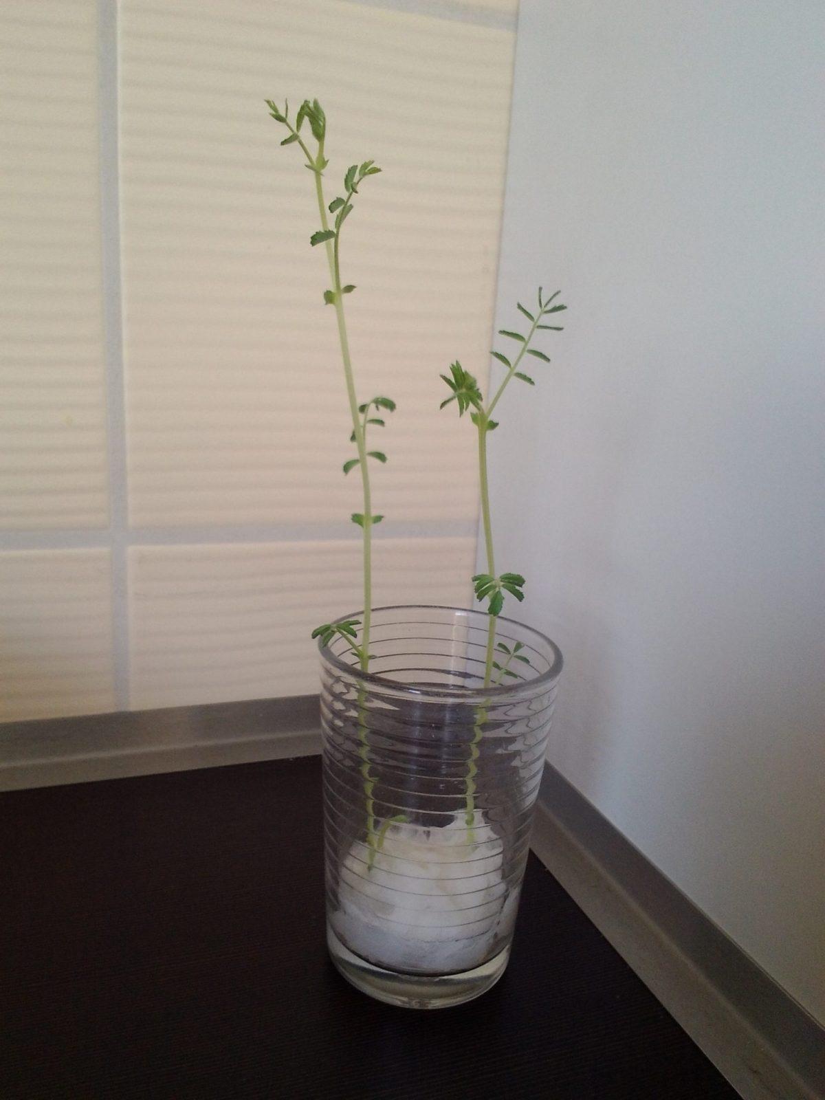 Plantando Semillas - Actividad para los niños
