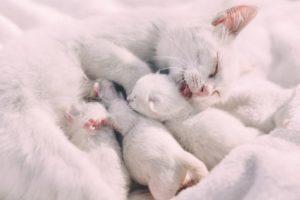 que es el colecho - gatitos durmiendo con mamá