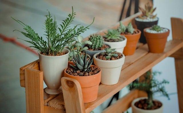 Decoración y plantas en la calle