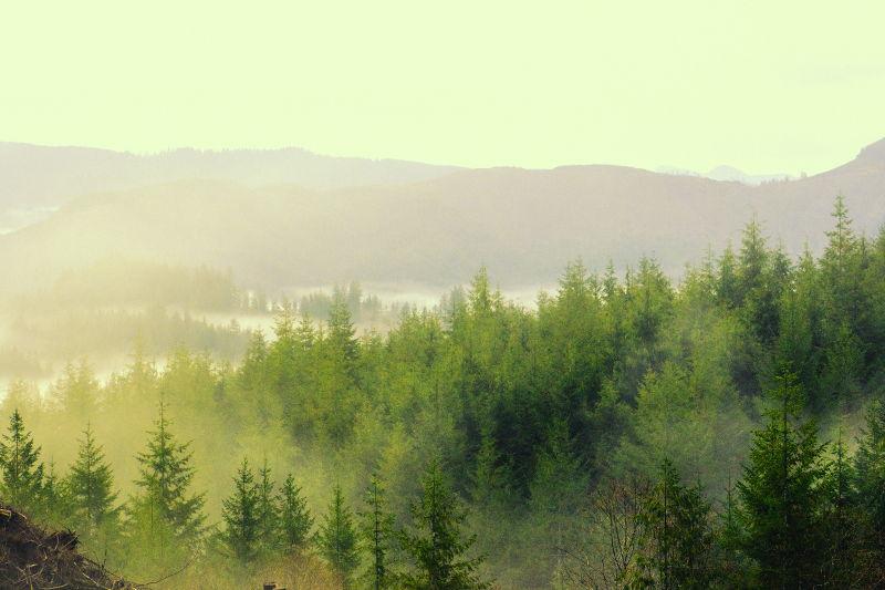 Imagen bosque húmedo para ejemplificar el clima y humedad ambiente de Alemania.